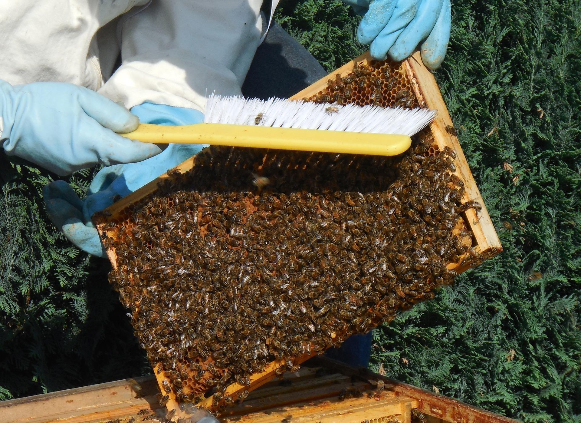 LeadBees : un concept innovant pour les apiculteurs-1
